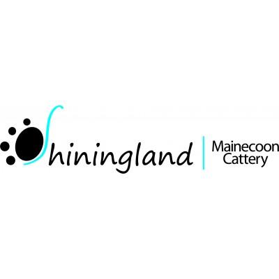 Shiningland Mainecoon Cattery